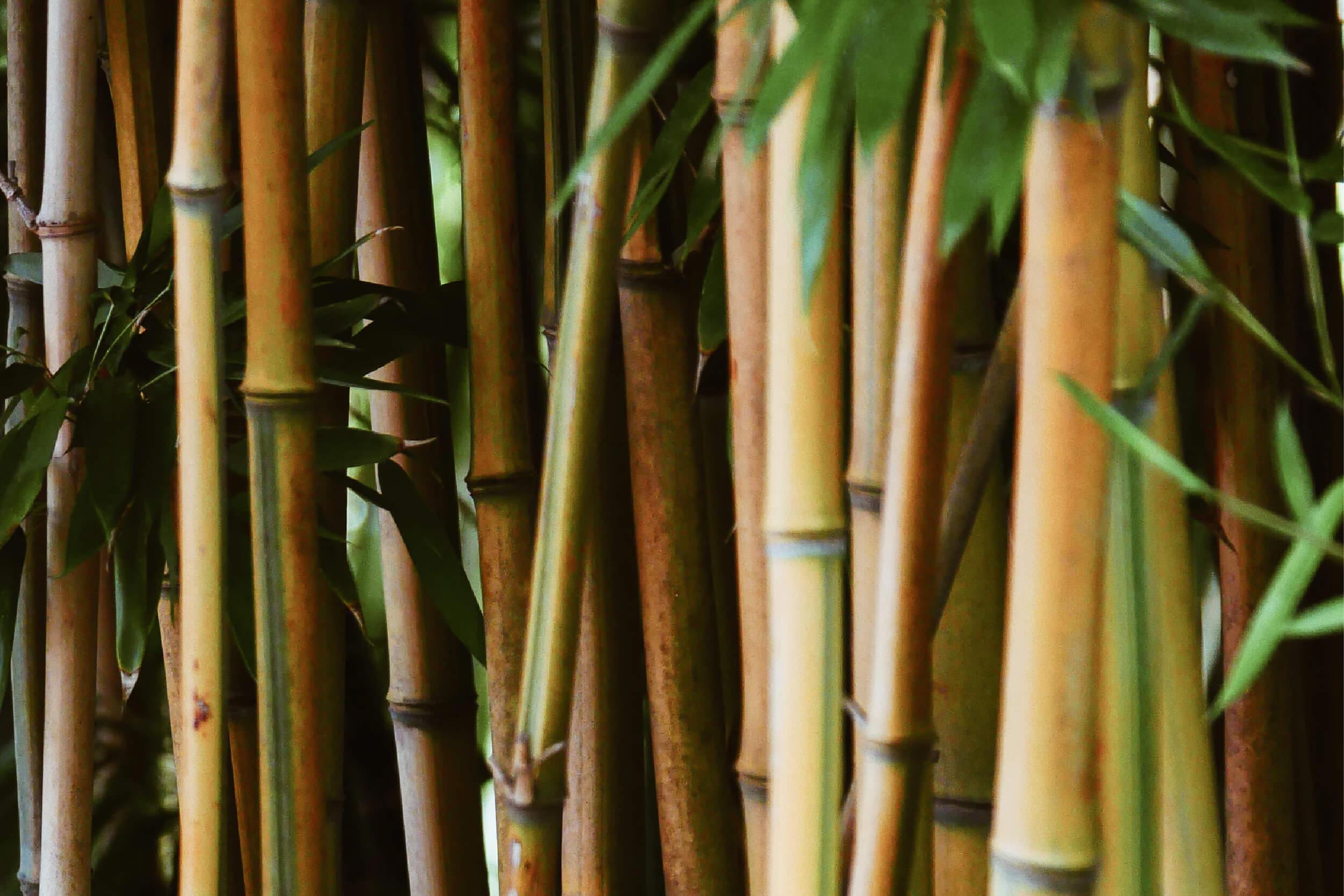 Het ecologische alternatief voor tropisch hardhout